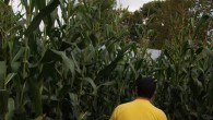 The Great Vermont Corn Maze - Danville, VT