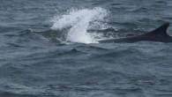 Whale Watching Tour - Portland, ME